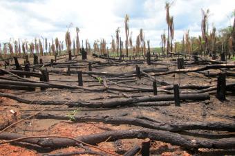 Deforestation in Amazon