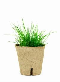 Biodegradable Plant Containers