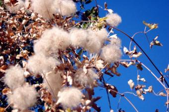 Earth Friendly Textiles
