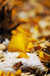 leaves for composting in winter