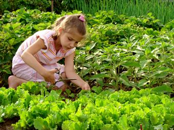 https://cf.ltkcdn.net/greenliving/images/slide/88416-650x488-kr_lettuce_.jpg