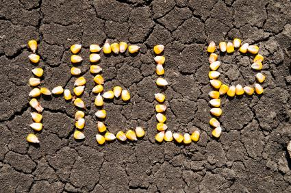 Word help written in corn
