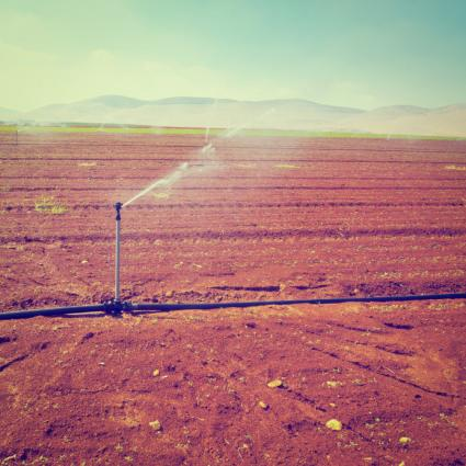 Irrigating bare field