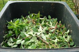 green compost material