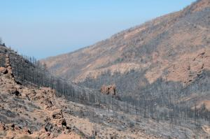 area after wildfire