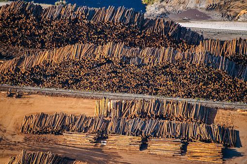 logged tree trunks