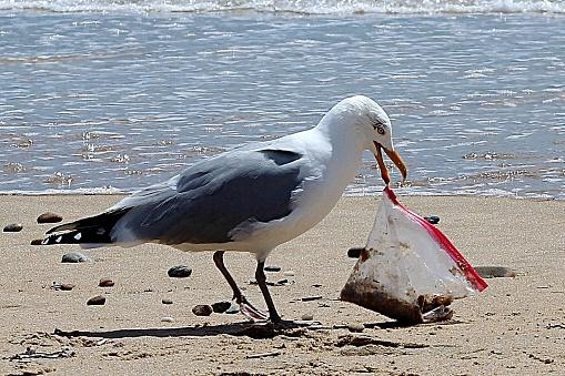 Seagull Holding Plastic Bag On Beach