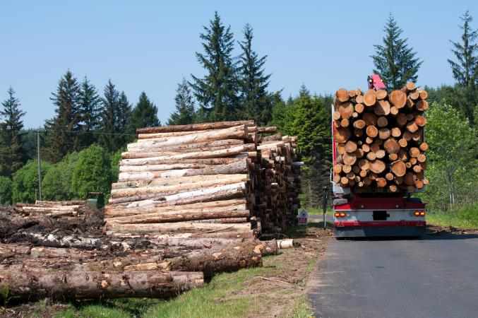 loading logs on to truck