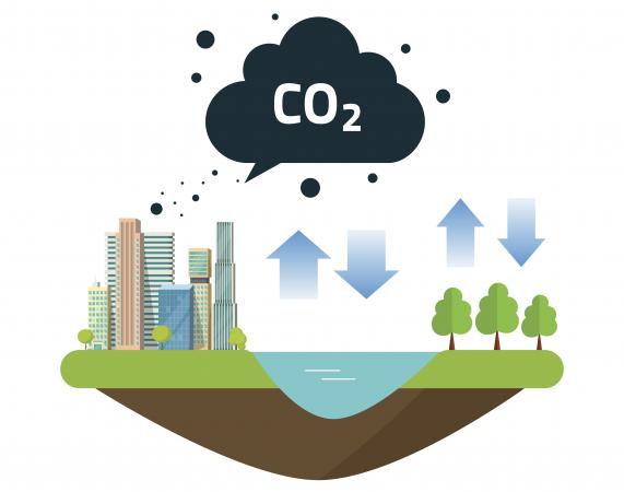 Basic carbon cycle graphic