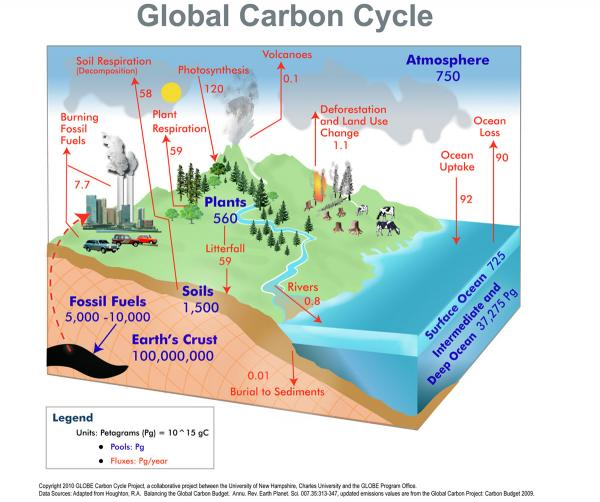 226520 600x502 globalcarboncycleg the global carbon cycle ccuart Gallery