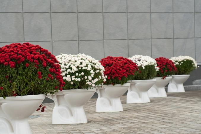 flowers in toilet flowerpots