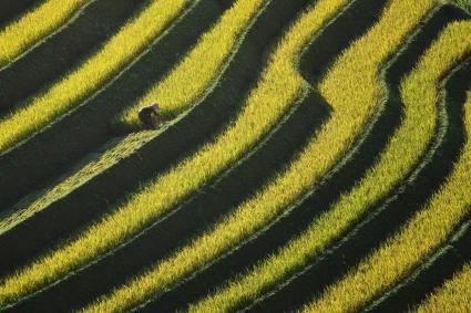 Rice field terrace farm