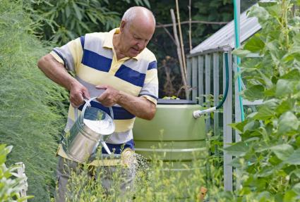 Man Watering Vegetable Garden From Rain Barrel