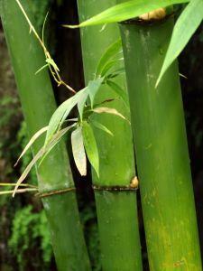 Bamboo Floor Durability