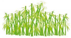 Grow bamboo