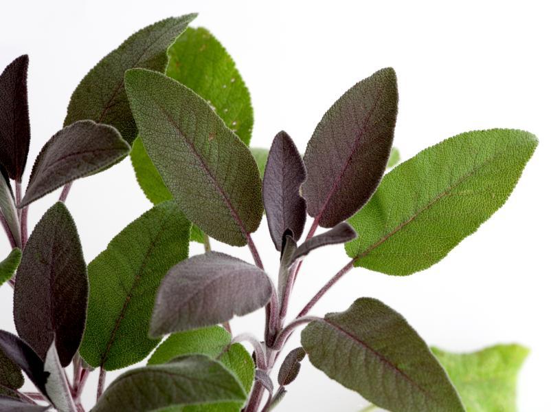 https://cf.ltkcdn.net/herbs/images/slide/123853-802x599r1-iStock_PurpleSage.jpg