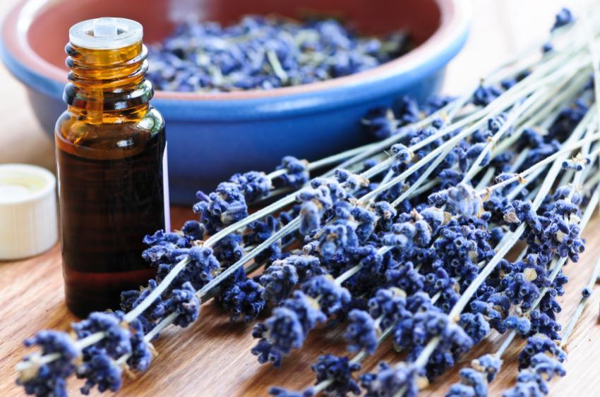 https://cf.ltkcdn.net/herbs/images/slide/131644-850x563r1-lavender1.jpg