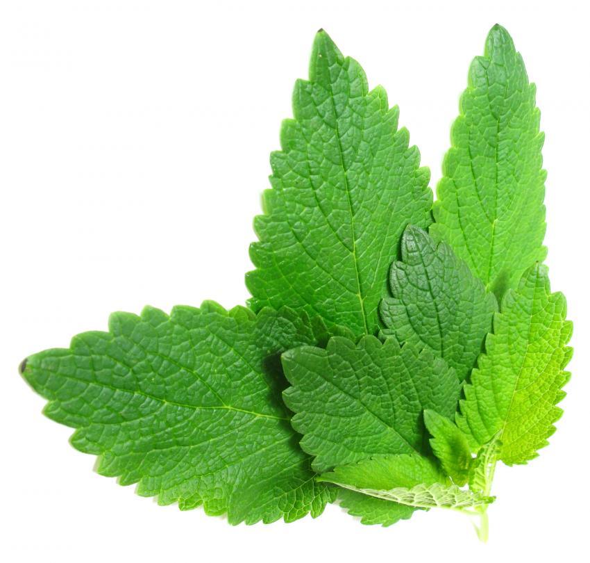 https://cf.ltkcdn.net/herbs/images/slide/145536-850x810-lemon-balm.jpg