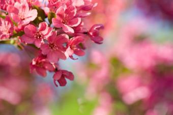 Flower Essence for Emotional Eating