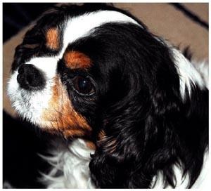 Medicinal Herbs for Canine Use