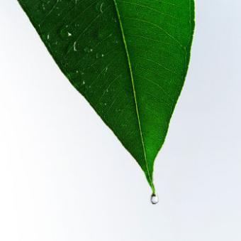 Uses for Eucalyptus Oil