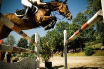Horses2.jpg