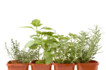 Pre-Planted Herb Gardens