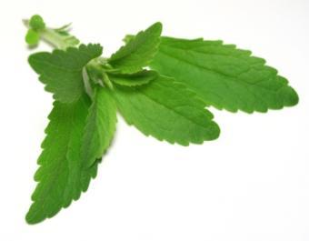 Stevia Side Effects