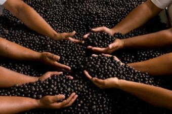 What Are the Benefits of Taking Acai