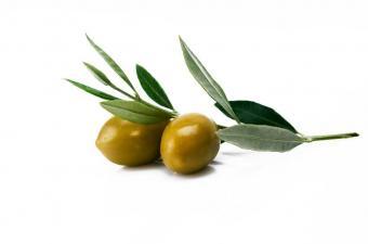 https://cf.ltkcdn.net/herbs/images/slide/123847-850x563-Olive_Leaf.jpg