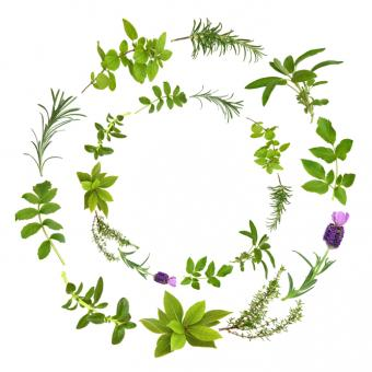 https://cf.ltkcdn.net/herbs/images/slide/126540-693x693r1-herbalwreathbigfile.jpg