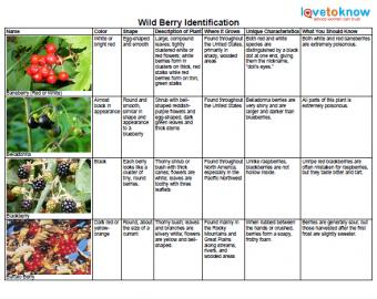 wild-berry-identificaton-thumb.jpg
