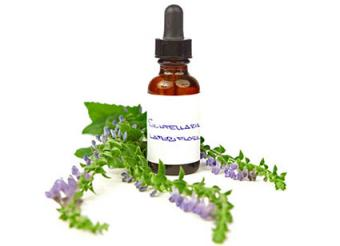 Uses for the Skullcap Herb