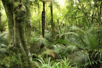 New Zealand Herbal Medicine