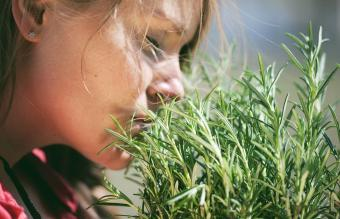 Woman smelling fresh rosemary