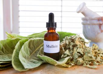 Mullein, Verbascum thapsus extract with fresh and dried leaves