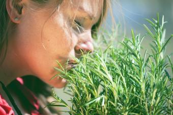 Can Herbs Help With Memory?