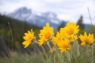 Arnica,homeopathic