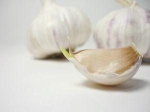 Garlic is a popular medicinal herb