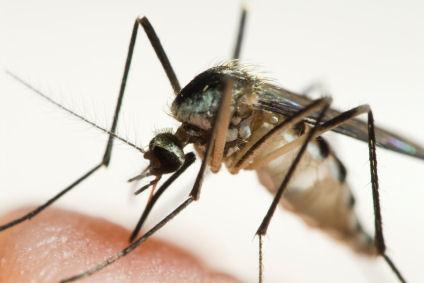 Mosquito Remedy
