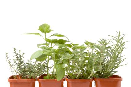 Potted herbs for your garden