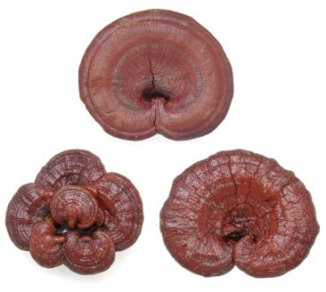 Reishi is a natural blood thinner.