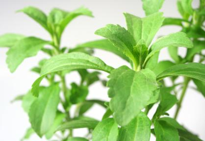 Stevia is useful for [Herbs_for_Diabetes