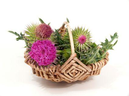Milk Thistle basket