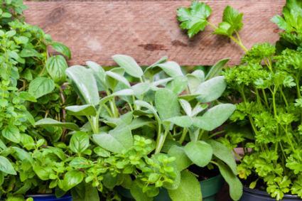 Culinary herb garden; © Cornelia Pithart | Dreamstime.com