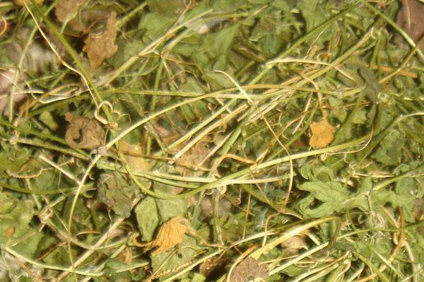 Dried Cerasee leaves