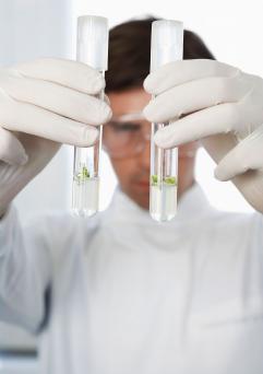 Lab Worker Examining Test Tubes