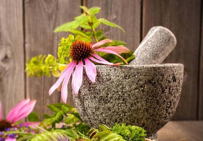 Echinacea flower in stone mortar