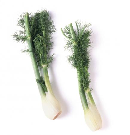 Two bulbs of fennel with stems