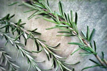 closeup of rosemary stalks on table